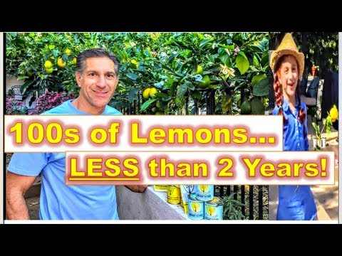 "Free-Standing ESPALIER ""TRAINING"" Citrus Trees 