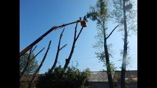 видео Цена на спиливание деревьев- Услуги по спиливанию аварийных и старых деревьев