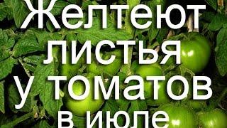 Желтеют листья у помидоров в июле. Меняем стратегию(, 2016-07-28T07:12:01.000Z)