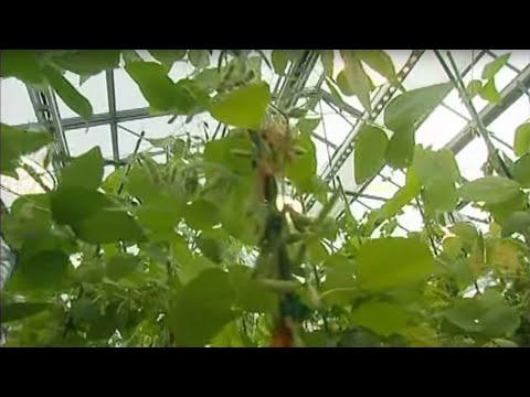 OGM, l'enjeu planétaire - Documentaire choc