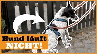 Hund will nicht weitergehen I Mein Hund bockt an der Leine I Leinenführigkeit Hund