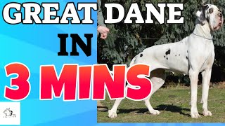 GREAT DANE Dog Breed in 3 Minutes (2021)! DogCastTV!