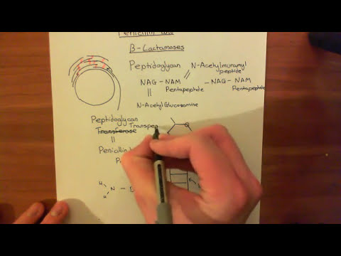 Penicillin and Beta Lactamases Part 1