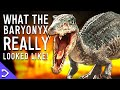 What Did The Baryonyx REALLY Look Like?