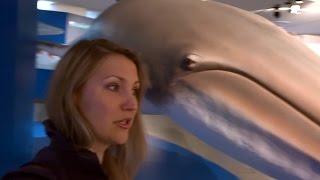 """Киты, Дельфины, Касатки и """"человечское"""" к ним отношение в Haus der Natur"""