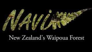 New Zealand Waipoua Forest Tour - Tane Mahuta