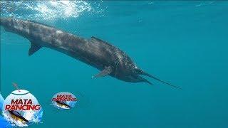 Download lagu Susahnya Memancing Ikan Layaran Sampai Senar Putus - Mata Pancing (14/10)