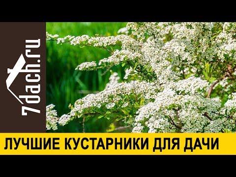 Вопрос: Какие посадить на даче кустарники, которые цветут всё лето?