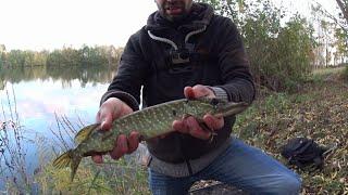 Ловля щуки на спиннинг Разведую новое озеро Простая рыбалка с берега на джиг Ищу щуку