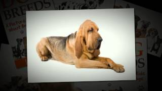 Video Book For Kids About Dogs