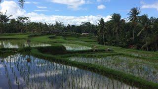 15 JOUR À BALI à la découverte des rizières et des îles