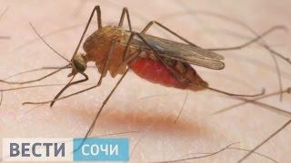 В Сочи принимают все меры, чтобы не допустить проникновения вируса Зика(http://vesti-sochi.tv., 2016-02-09T05:21:30.000Z)