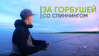 Ловля горбуши на спиннинг. Рыбалка на Кольском 2021