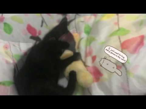 THE CAT SHOW 仔仔妺妹的親生女兒二個月大小吉貓貓食蕉🍀(BBHOCHAN)
