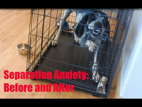 B the Dog Overcomes her Separation Anxiety