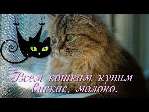 С ДНЕМ КОШЕК, ДРУЗЬЯ!
