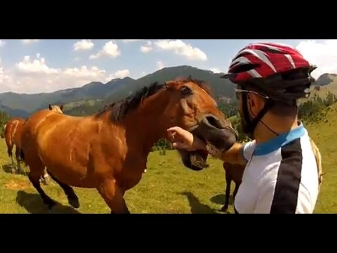 Horse Language & Warnings People Miss- Critical Horse Eyes - Foal Rejection-