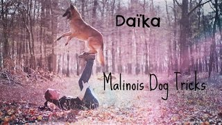 Daïka, Malinois Dog Tricks [2 Years]