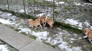 """D"" Litter High-Lord kennel puppies for sale"