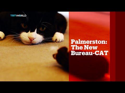 TRT World - World in Focus: Palmerston, The new bureau-CAT