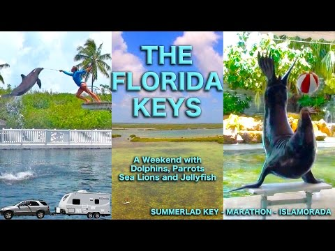 Florida Keys: A Holiday Weekend with Dolphins, Sea Lions, Parrots, and Jellyfish | Traveling Robert