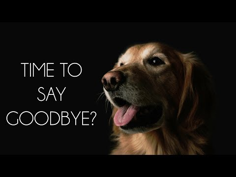 Saying Goodbye: The Right Time To Euthanize Your Pet