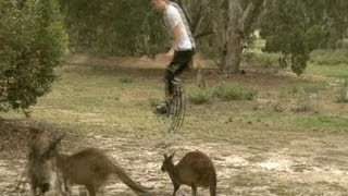 Kangaroo vs Jumping Stilts