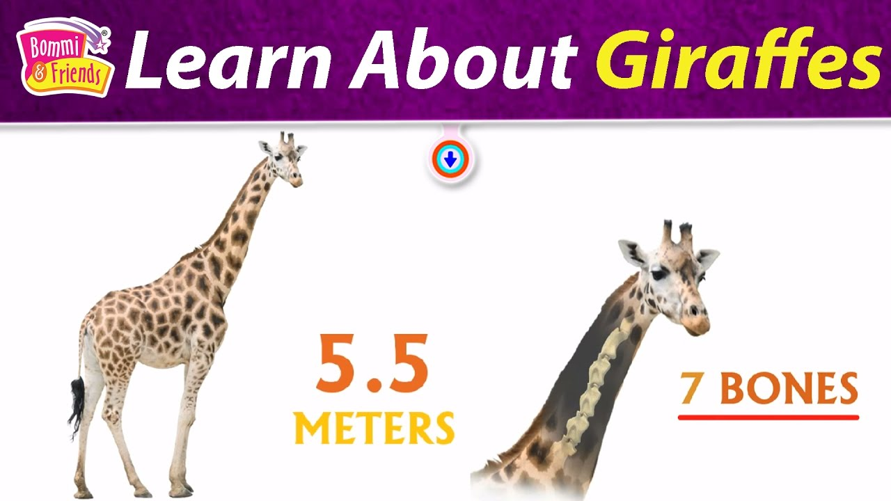 Giraffes Facts For Kids with Bommi | Facts For Kids with ...