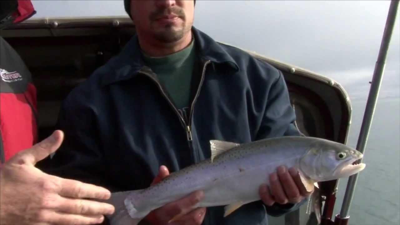 Big trout at bear lake northern utah youtube for Northern utah fishing report