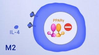 The nuclear receptor PPARγ controls progressive macrophage polarization
