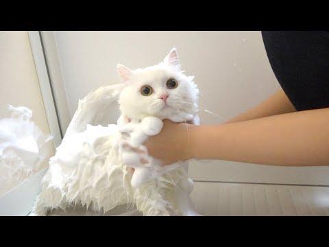 ふわふわ猫をもこもこホイップ泡で洗ったら真の姿に!? 笑