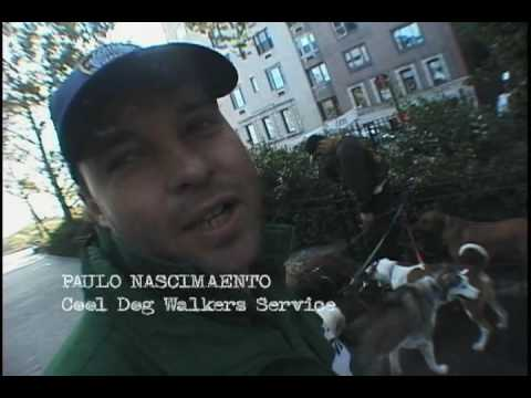 Dog Soldiers 2/5  New York dog walking documentary