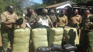 Police net bhang worth Sh4m in Migori as suspects escape
