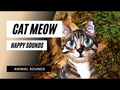 Cat Meows Sounds Free
