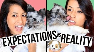 Expectations vs. Reality: Having a Dog | Ariel Hamilton