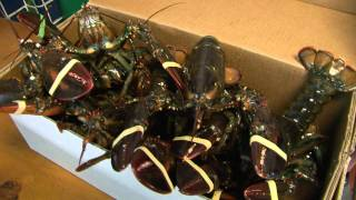 Mainely Lobster & Seafood