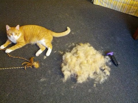 FURminator Review - Cat deshedding brush