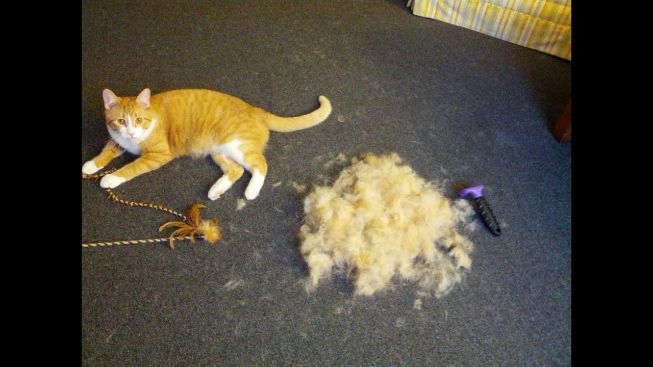 Best Cat Brush