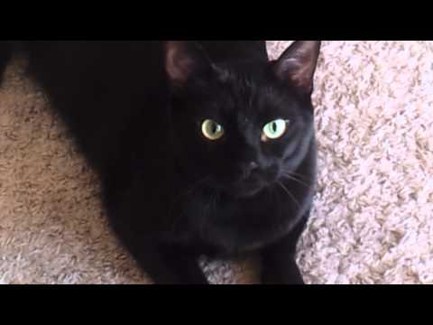 Salem The Talking Cat!!