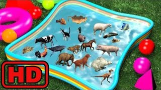 Kid -Kids -Animal Toy Lot In Swimming Pool/Farm ,Sea,Zoo Animals Learning fun For Children/Bugs Ins
