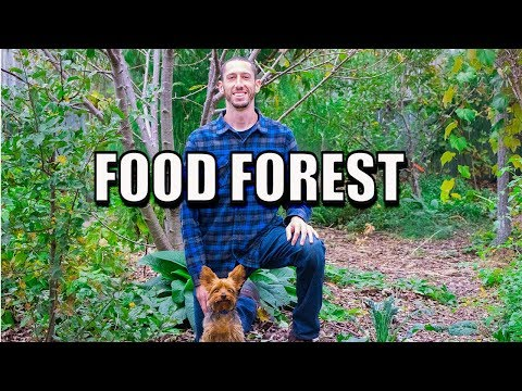 Backyard Food Forest, Beyond Organic Gardening