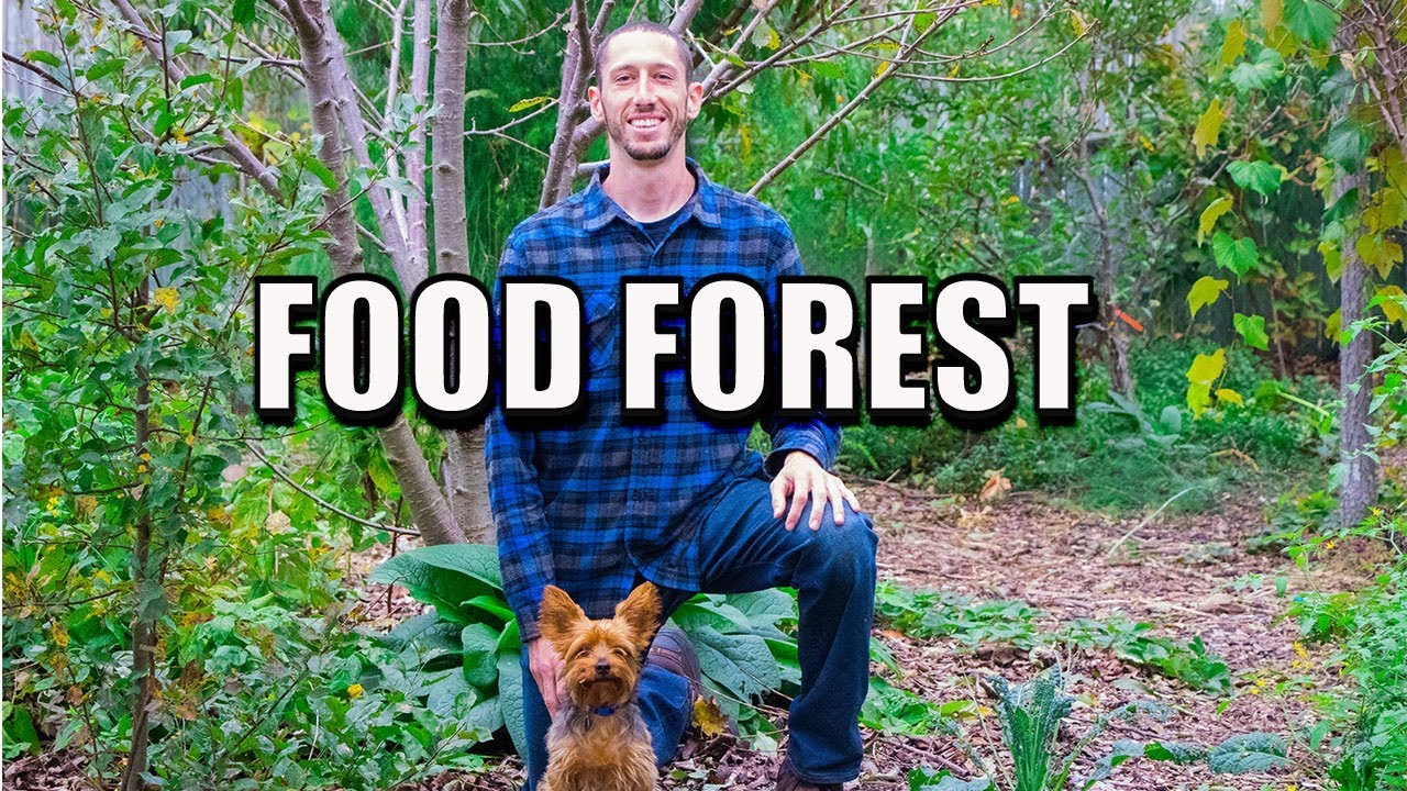 backyard food forest beyond organic gardening youtube