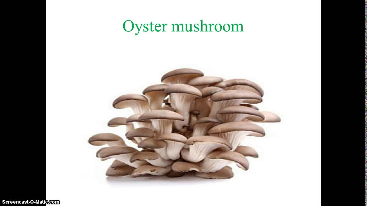 mushroom spawn production Important sources of mushroom spawn are listed below:  spawn production  laboratory, horticulture complex, chhouni kalan, hoshiarpur.