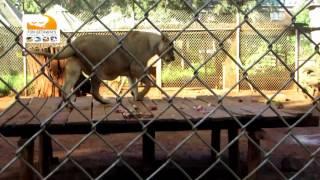 Nairobi National Park and Animal Orphanage with fungetaways Kenya