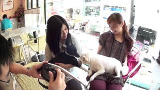 Hunni 和朋友們今次去試o下幫襯另一間狗餐廳,點知.....(Please visit :...