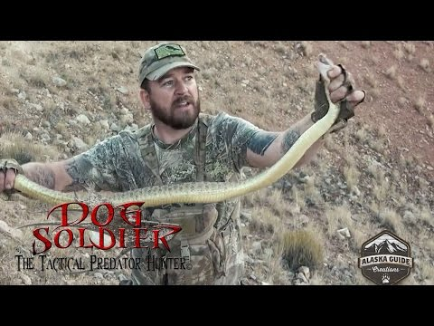 450yd Coyote KILL And A Giant Rattle Snake!  Coyote Hunting And Predator Calling TIPS At Its Best!