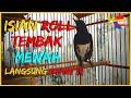 Kacer Gacor Konslet Muntahin Isian Roll Tembak Mewah Dijamin Yang Susah Bunyi Langsung Respon  Mp3 - Mp4 Download