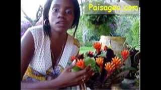 Plantas Bromelias Para Coleccionar En Tu Jardín