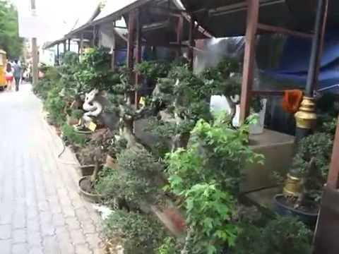 Plants Nursery Shop in Chatuchak, Bangkok, Thailand