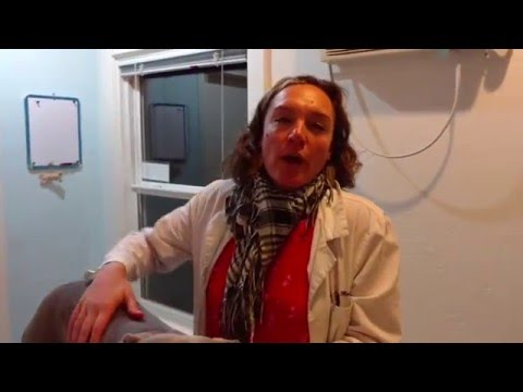 Holistic Veterinary Food Therapy Dietary Consultations